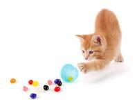 溢出软心豆粒糖的逗人喜爱的橙色小猫在复活节彩蛋外面。 免版税库存图片