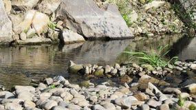 溪在夏天 免版税库存图片
