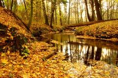 溪在森林里。 库存照片