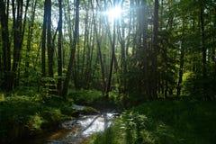 溪在森林里在清早 库存照片