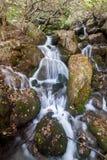 溪在森林里 库存图片