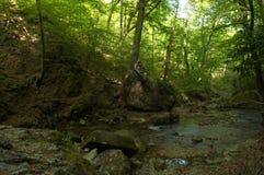 溪在森林里 免版税库存图片