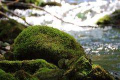 溪在森林里 免版税库存照片