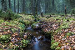 溪在秋天森林里 库存图片