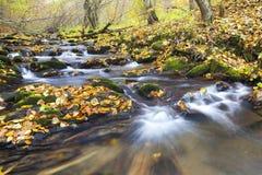 溪在秋天 库存照片