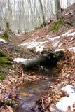 溪森林 免版税库存照片