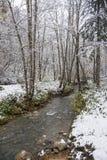 溪流动 库存照片