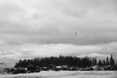 滑动在小海岛上的唯一海鸥 免版税库存照片