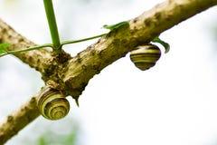 滑动在湿木纹理的蜗牛 E 库存图片