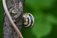 滑动在湿木纹理的蜗牛 E 库存照片