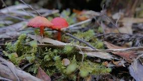滑子被射击在湖st clair雨林的蘑菇  影视素材