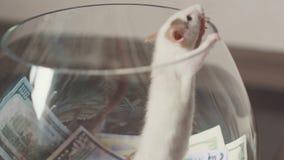 滑稽一只鼠与很多金钱,但是没有自由 影视素材
