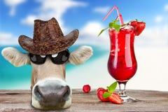 滑稽海滩的母牛 免版税库存照片