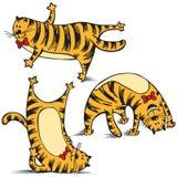滑稽猫的执行做体育运动 免版税图库摄影