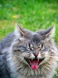 滑稽猫的表面 免版税库存照片