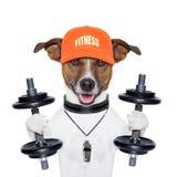 滑稽的健身狗 免版税图库摄影