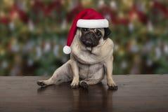 滑稽的圣诞节哈巴狗小狗下来坐木地面,佩带的圣诞老人帽子 免版税库存图片