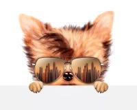 滑稽的在横幅后的狗佩带的太阳镜 图库摄影
