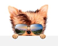 滑稽的在横幅后的狗佩带的太阳镜 库存照片