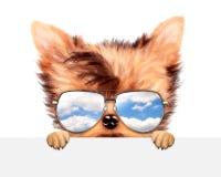 滑稽的在横幅后的狗佩带的太阳镜 库存图片