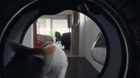 滑稽的好奇猫嗅到的和探索的洗衣机 从里边看法 家务和责任概念 股票视频