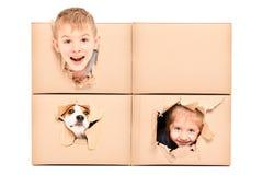 滑稽的孩子和狗神色在一个被撕毁的孔外面在箱子 免版税库存图片
