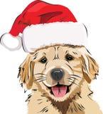 滑稽的小狗/金毛猎犬,在一个红色新年` s盖帽,逗人喜爱的微笑的小狗 免版税库存图片