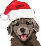 滑稽的小狗/金毛猎犬,在一个红色新年` s盖帽,逗人喜爱的微笑的小狗 库存照片