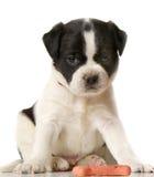 滑稽的小狗 库存照片