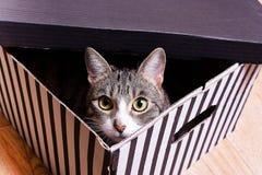 滑稽的小猫在一个镶边箱子坐 免版税库存图片