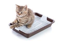 滑稽的小猫在被隔绝的猫洗手间坐白色背景 免版税库存照片