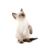 滑稽的小猫 图库摄影