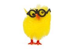 滑稽的小鸡 免版税库存照片