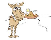 滑稽的布朗骆驼,例证 免版税库存图片