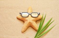 滑稽的海星在夏天靠岸与沙子 图库摄影