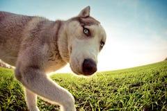 滑稽的狗 库存照片
