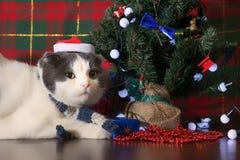 滑稽的猫在说谎在新年树下的圣诞老人盖帽 免版税库存照片