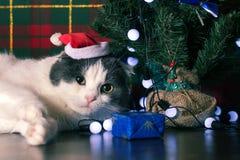 滑稽的猫在说谎在新年树下的圣诞老人盖帽 库存照片