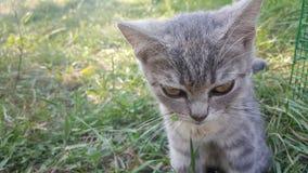 滑稽的猫宠爱逗人喜爱家庭小 免版税库存照片