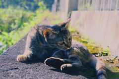 滑稽的猫有时他们的行为也是可爱的 免版税库存照片