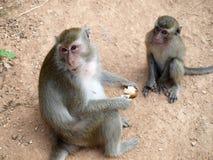 滑稽的猴子 免版税图库摄影