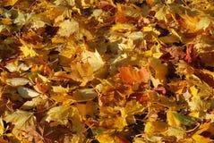 滑稽的秋天 图库摄影