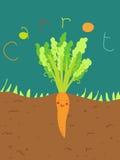 滑稽的红萝卜 库存图片