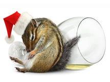 滑稽的被喝的花栗鼠礼服圣诞老人帽子 免版税库存照片