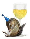 滑稽的被喝的花栗鼠,庆祝概念 免版税库存图片