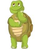 滑稽的认为的乌龟 免版税库存图片