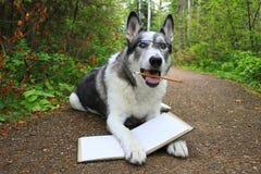 滑稽的面孔使与一支铅笔的狗惊奇在它的嘴 免版税库存照片