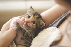 滑稽的3个星期年纪被采取的白棉布小猫 库存照片