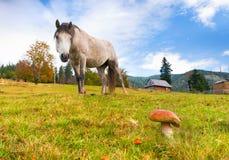滑稽的mushroomer 图库摄影