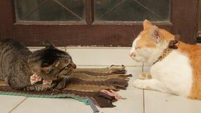 滑稽逗人喜爱猫战斗 免版税库存照片